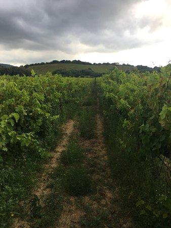Piero Mancini Vineyards (Balajana Estate): Lovely vineyard!