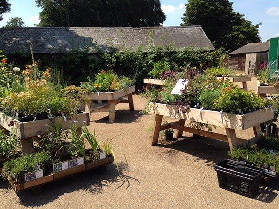 Hinton Ampner, UK: Garden centre