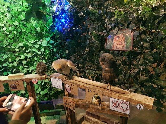 Bird Cafe, Asakusa: More owls