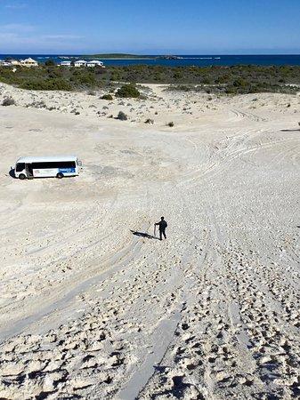 Pinnacles Desert, Yanchep National Park & Sand-Boarding Tour: Lancelin sand dune