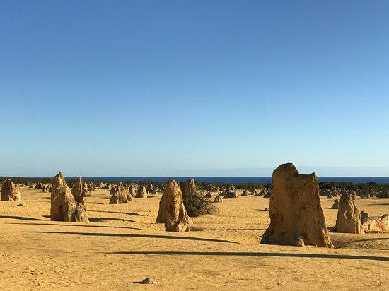 Pinnacles Desert, Yanchep National Park & Sand-Boarding Tour: The Pinnacles