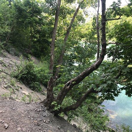 Niagara Gorge Trail: photo7.jpg