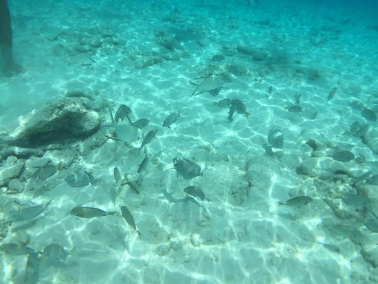 Mermaid Boat Trips照片