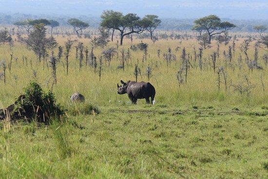 Homa Bay, Kenya: Rhino!