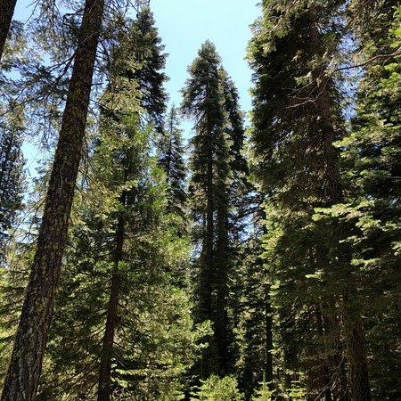 Mill Creek Resort afbeelding