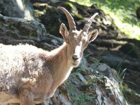 Parc de Merlet: Les animaux
