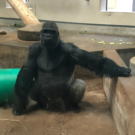 Denver Zoo照片