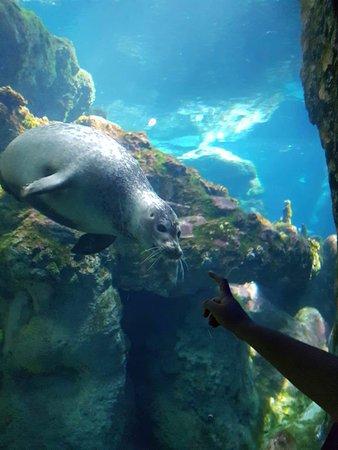 热那亚水族馆照片