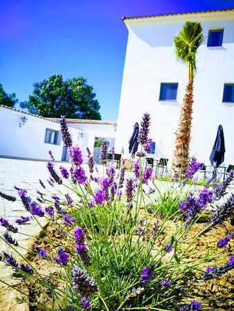 Hotel Ronda Moments: Lavender Time