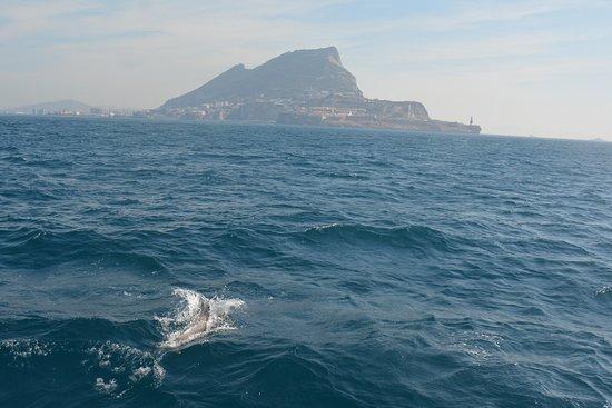 海豚在直布罗陀观看游览照片