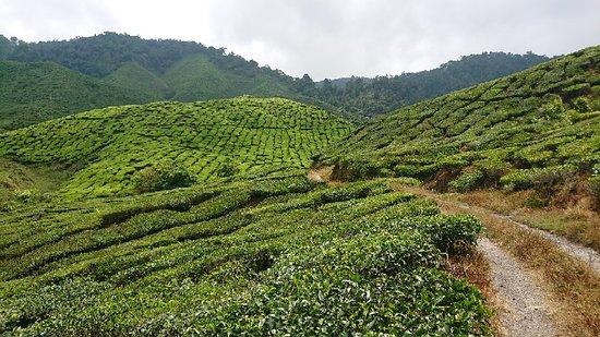 Танах-Рата, Малайзия: Trail no. 6 views