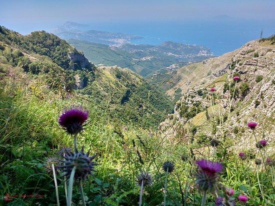 Villaggio Monte Faito, Italy: veduta costiera sorrentina e fiori