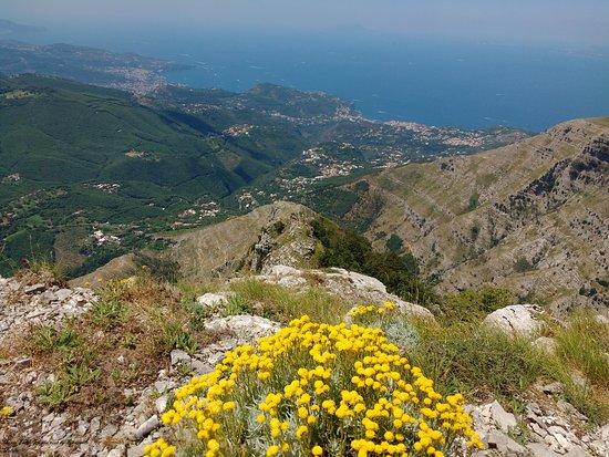 Villaggio Monte Faito, Italie : veduta costiera sorrentina e fiori gialli
