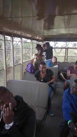 Lion and Safari Park: On a our of the park