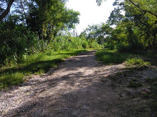 Markham Park: trails