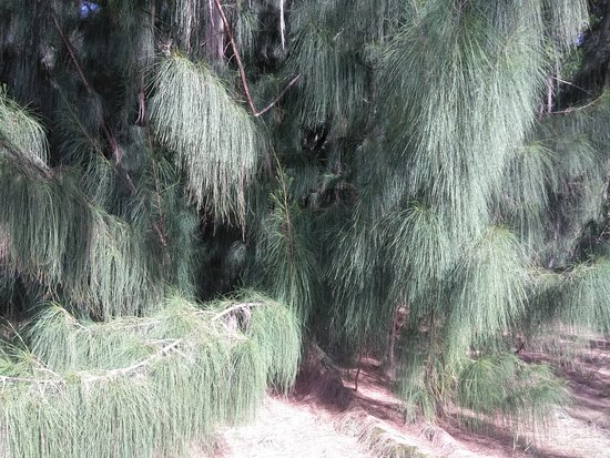 Markham Park: trees