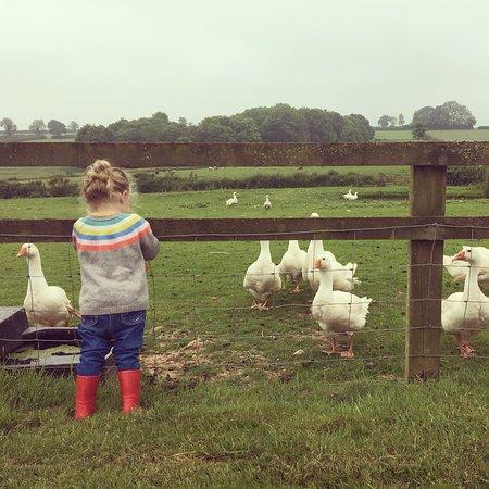 Middle Stone Farm ภาพถ่าย