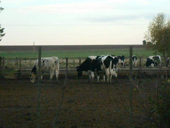 Saldungaray, Argentyna: Vaquitas