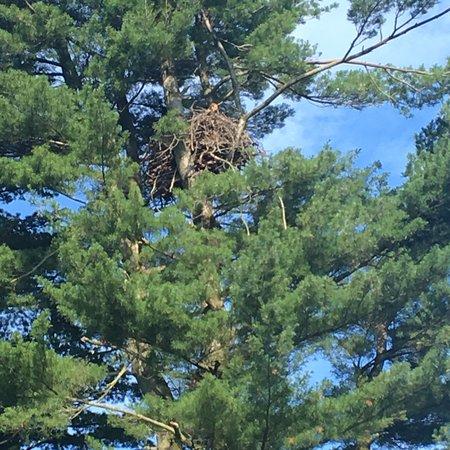Shawnee on Delaware, Pensilvania: photo5.jpg