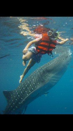鲸鲨游泳体验和阿基尼德瀑布(从宿雾出发)照片