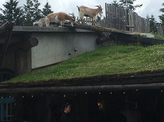 ‪Goats on the Roof‬