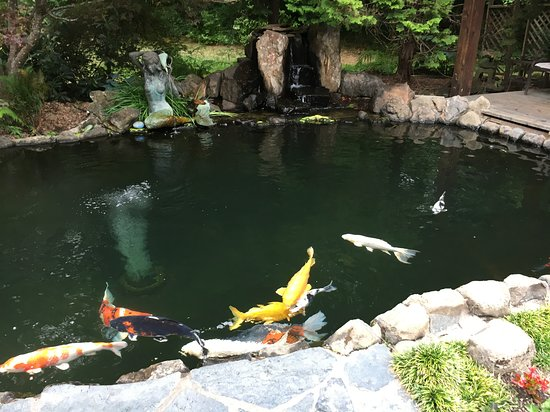 Idleyld Park, Орегон: this waterfall and watching the beautiful koi from the gazebo while sipping wine is pure therapy