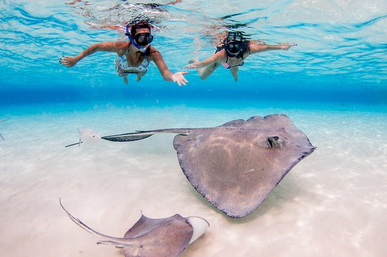 George Town, Gran Caimán: Profile picture for Stingray City tours in Grand Cayman