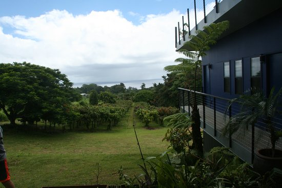 Hamakua Chocolate Farm: view from the farmhouse (and guest lodging you can rent) to the sea