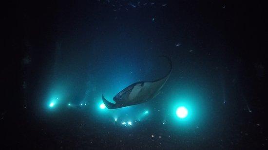 Afternoon Dive and Manta Ray Night Dive Kona Hawaii张图片