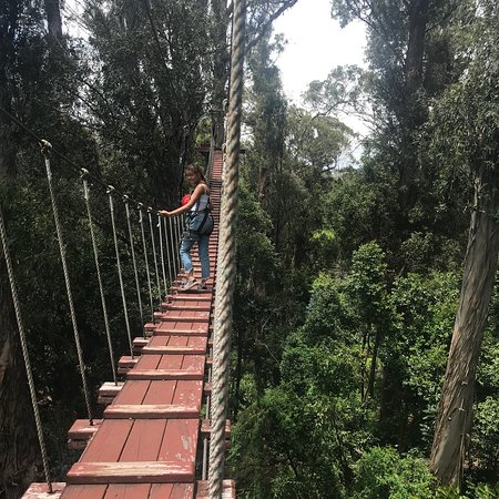 Piiholo Ranch Zipline Picture