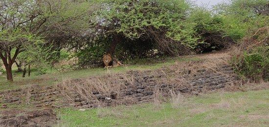 Devalia Safari Park: IMG_20180706_172411_large.jpg