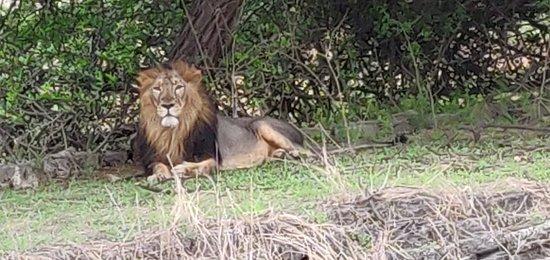 Devalia Safari Park: IMG_20180706_172429_large.jpg