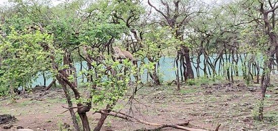 Devalia Safari Park: IMG_20180706_175127_large.jpg