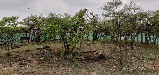 Devalia Safari Park: IMG_20180706_175106_large.jpg