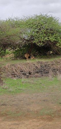 Devalia Safari Park: IMG_20180706_172402_large.jpg