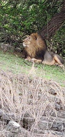 Devalia Safari Park: IMG_20180706_172326_large.jpg