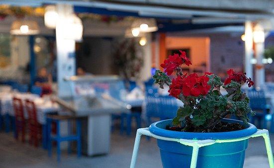 Perigiali: Το Περιγιάλι | Η καλύτερη ταβέρνα στην Ολυμπιακή Ακτή | Seafood | Restaurant | Fish | Olympic Be