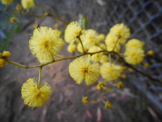Wandandian, Αυστραλία: Morton National Park