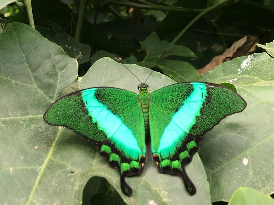 Tropical Butterfly House, Wildlife & Falconry Centre: I just love photos :-)