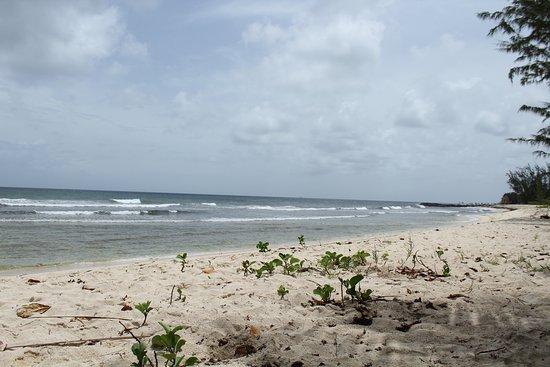 Ride The Tide Surf School: Barbados Summer surfing Drill Hall Beach