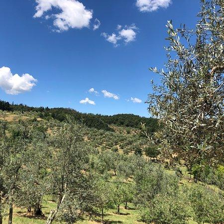 La Rimbecca Greve in Chianti Foto