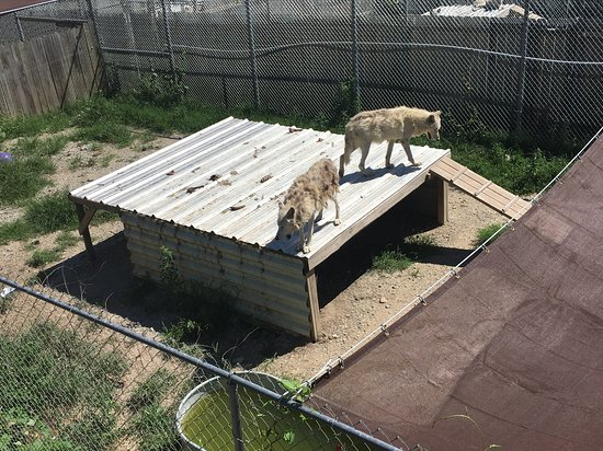 Wolf creek habitat and rescue: from observation deck