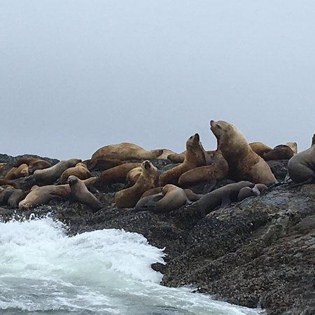 Foto de Adventure Tofino - Wildlife Tours