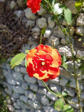 宁法花园 - 自然纪念碑照片