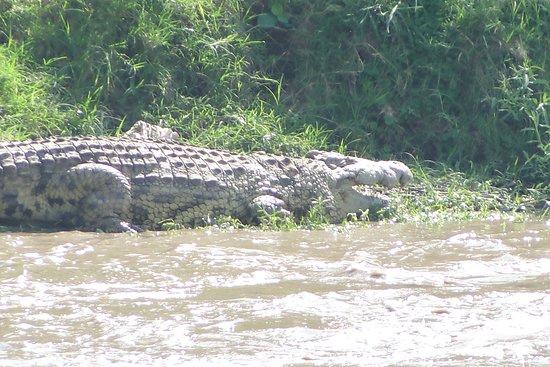 Nairobi Region, Kenya: Giant Mara croc.