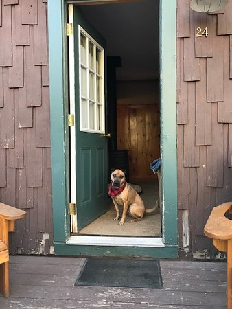 Tamarack Lodge and Resort: My puppy loved the cabin and the surrounding woods!