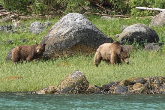 Tide Rip Grizzly Tours: Mating couple