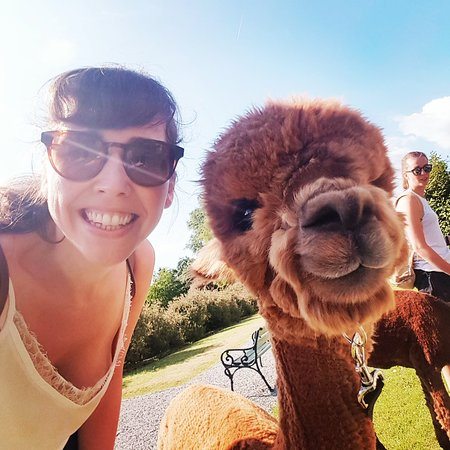 Alpacaly Ever After Foto