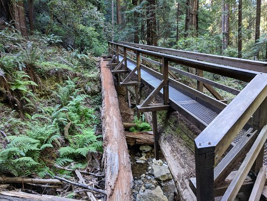 谬尔红杉森林照片