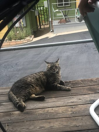 The Motor Lodge: Toonces, the resident cat